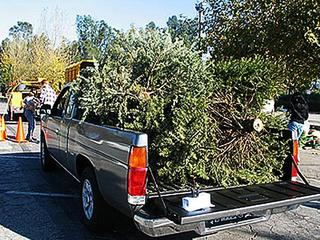 Christmas-tree-recycling-14925862.jpg
