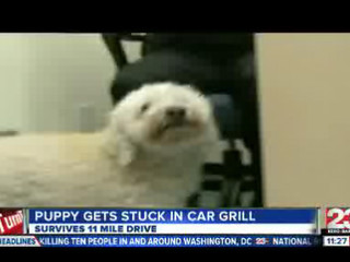 Puppy_Gets_New_Lease_On_Life_19390000_20121002211503