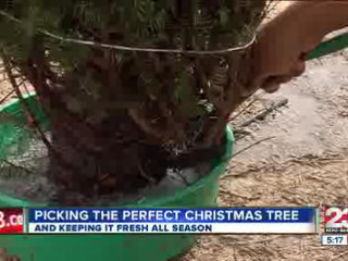 Selecting_the_best_Christmas_Tree_137670000_20121205210421
