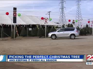 Selecting_the_best_Christmas_Tree_137670004_20121205210432