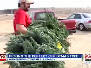 Selecting_the_best_Christmas_Tree_137670005_20121205210435