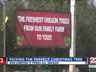Selecting_the_best_Christmas_Tree_137670006_20121205210437