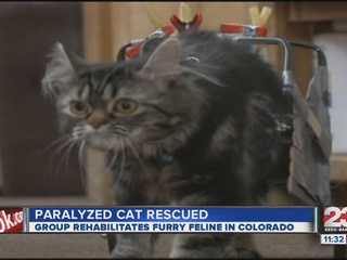 Flipper_The_Paralyzed_Cat_266110001_20130126080037