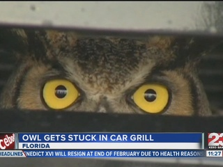 Owl Gets Stuck In Car Grill