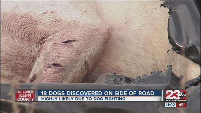Dead dog on road