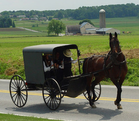 Riders in horse-drawn buggy victim of robbery