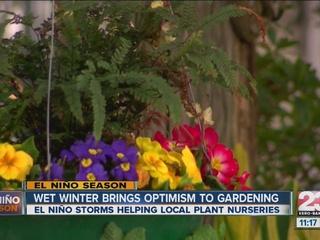 El Niño could help business at local nursery
