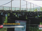 Thousands of marijuana plants found in Delano