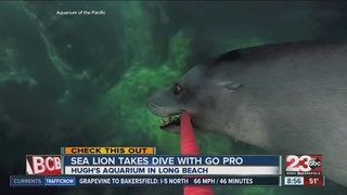 Sea Lion takes dive with a selfie stick