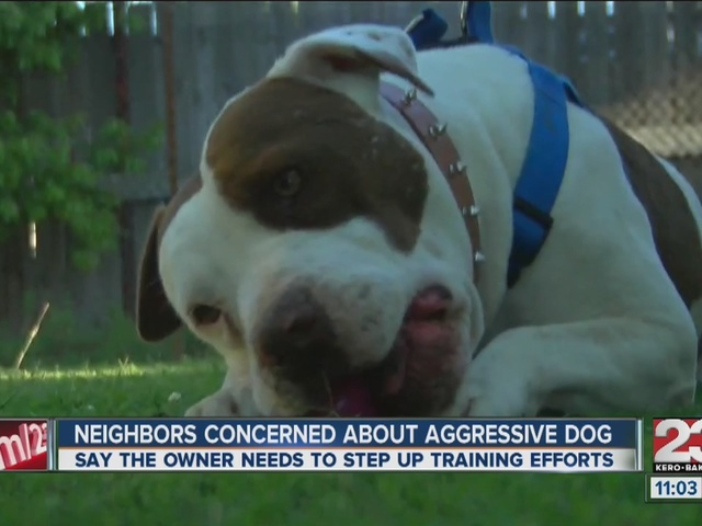 Neighbors concerned about aggressive dog