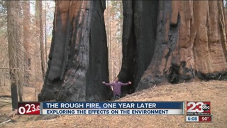 Rough Fire, one year later