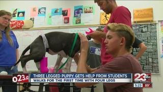 Three-legged dog gets leg from robotics students