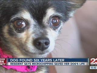 Dog missing for 6 yrs, reunited with her owner