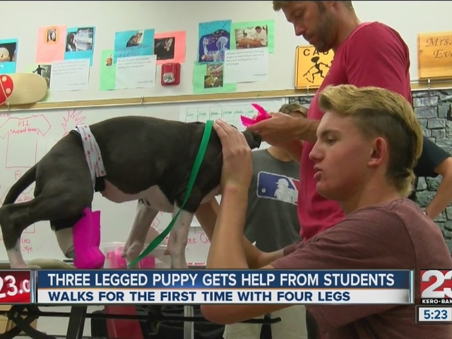 Three legged puppy gets help from students