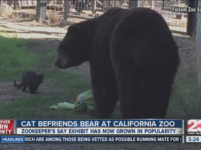 Cat and bear are BFFs at the Folsom City Zoo!