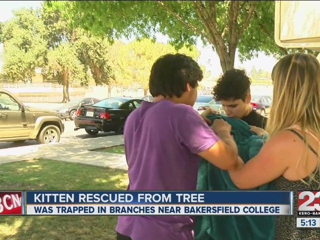Kitten rescued from tree