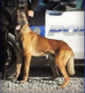 Porterville K9-officer killed in hot car
