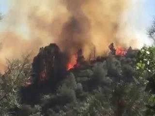 Cedar Fire grows to 21,017 acres Tuesday