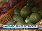 Avocado prices are through the roof