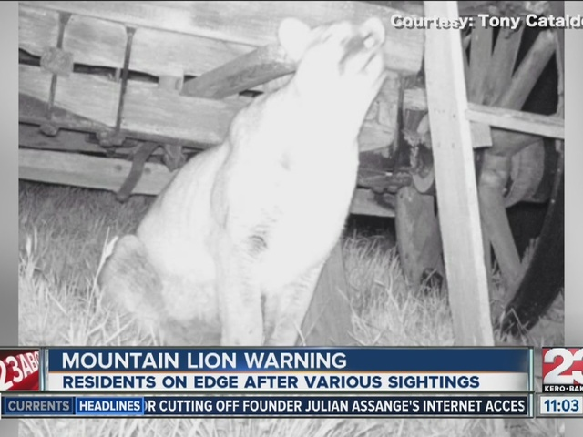Mountain lion sighting leaves residents on edge