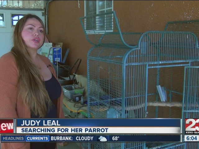 Local resident searches for stolen macaw