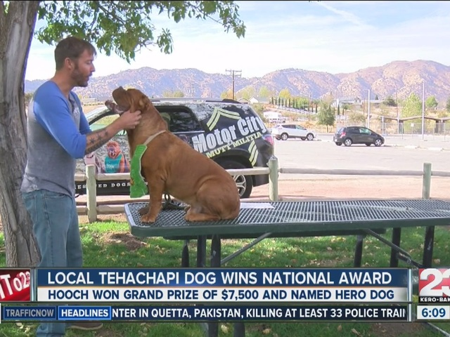 Tehachapi dog wins national American Hero award