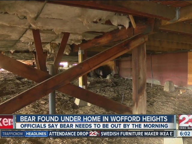 Bear found under home in Wofford heights