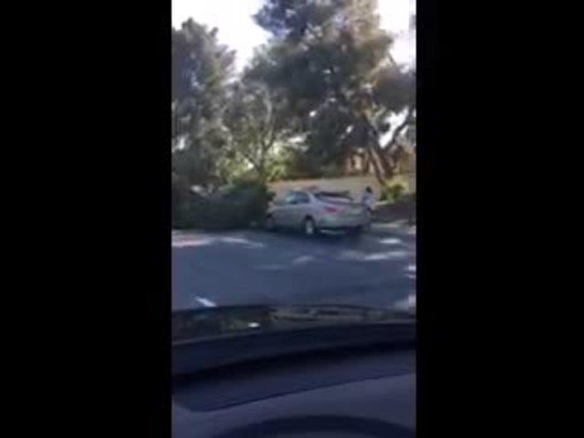 Gosford tree on car