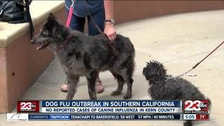 Dog flu outbreak in Southern California