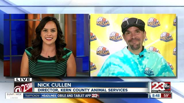 Director of Kern County Animal Services discuss details about Sunday-s…