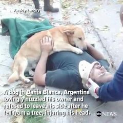 Dog refuses to leave owner's side after injury