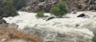 Rescue in Kern River near Lake Ming