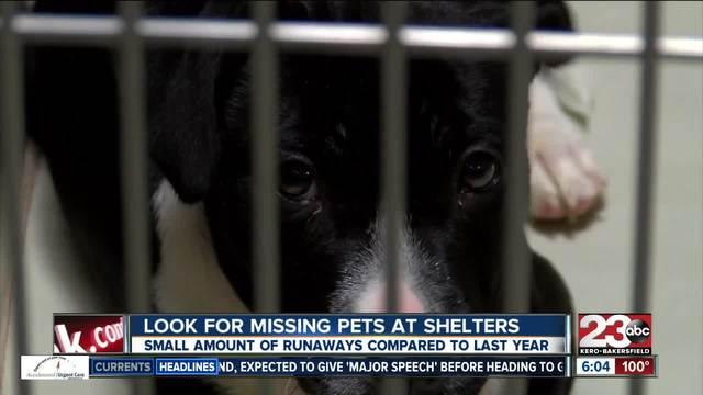 Dozens of lost animals fill Sacramento County shelter