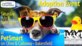 Marley's Mutts sponsors adoption event
