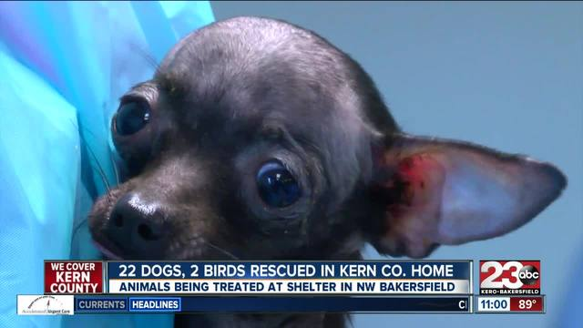 2 dozen animals rescued from terrible conditions