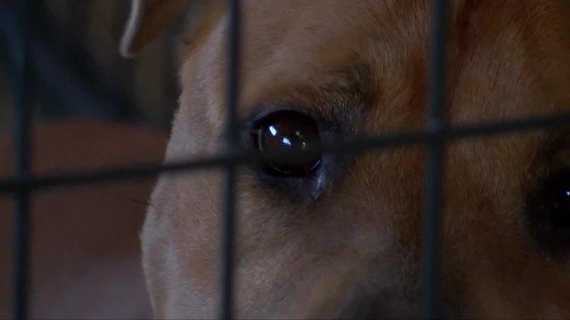 Marleys Mutts returns from Houston saving 40 pets from Hurricane Harvey