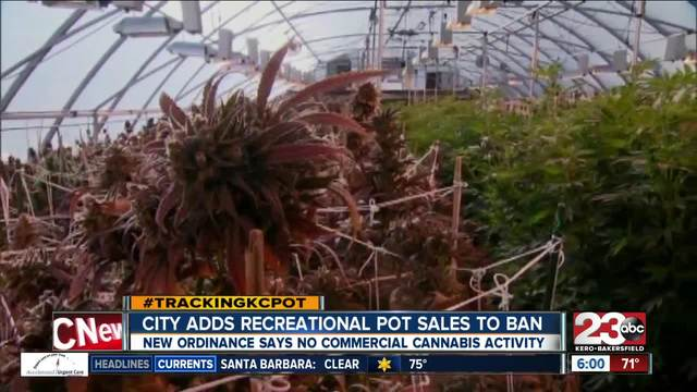Bakersfield leaning toward banning commercial cannabis activity