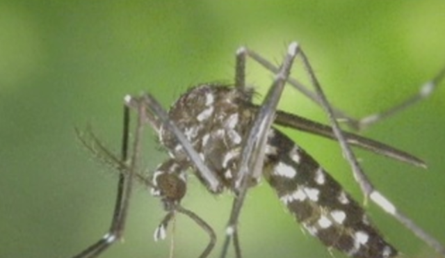 RI health officials report 2017's first human case of West Nile virus