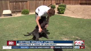 Critters Without Litters celebrates 5 years