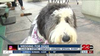 Two dogs getting married at Cloud 9 Coffee
