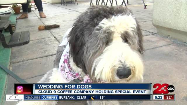 Wedding for dogs to be held at Cloud 9 Coffee Company