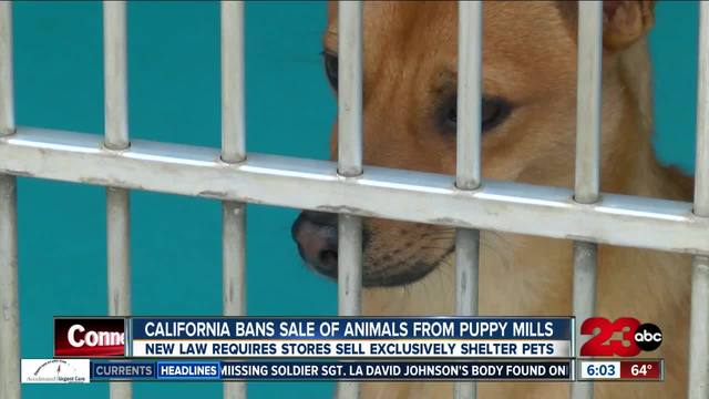 Governor Jerry Brown makes California first state to ban puppy mill…