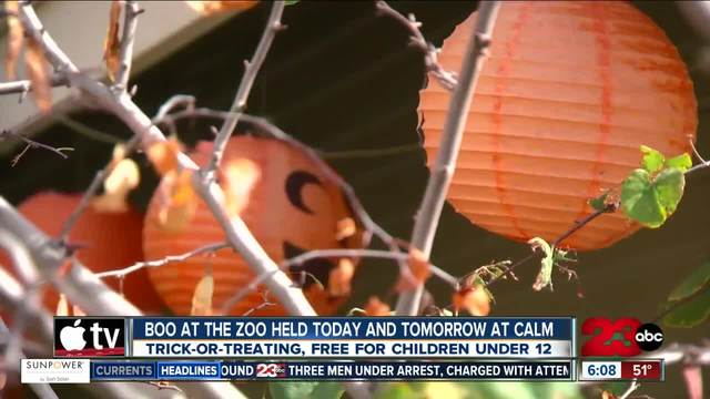 Boo at the Zoo event held at Calm this weekend for trick-or-treating…