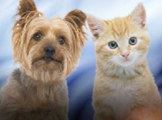 Pet food drive today for Erskine Fire victims