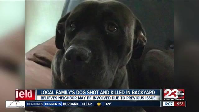 dog s death