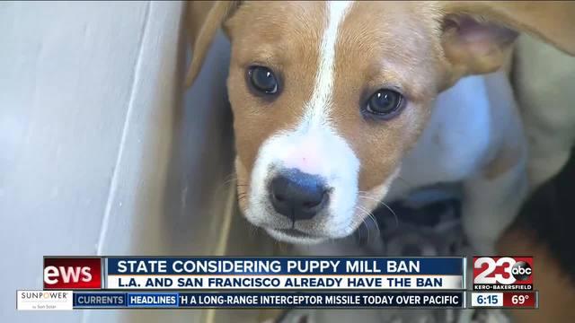 banning puppy mills