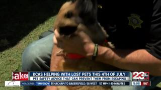 4th of July pet safety tips if they escape