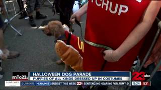 Halloween dog parade donated to hurricane relief