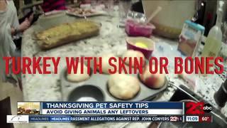 Tips to keep pets safe on Thanksgiving