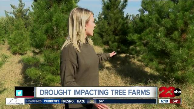 National Christmas tree shortage skyrockets prices